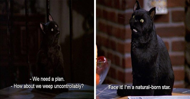 "salem the cat from sabrina the teenage witch - thumbnail includes two quotes from Salem the cat, ""we need a plan. how about we weep uncontrollable?"" and ""face it! I'm a natural born star"""