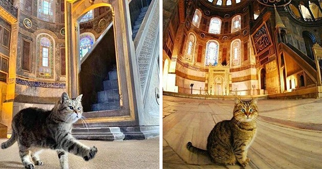 famous cat known as the hagia sophia cat has passed away at age 16 - thumbnail of gli the famous cat of hagia sophia