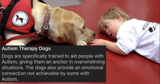 list of different kinds of service dogs with explanations about them and pictures thumbnail includes a picture of a dog and a kid lying on the floor with the caption 'Photo caption - (Conpr Autism Therapy Dogs Dogs are specifically trained to aid people with Autism, giving them an anchor in overwhelming situations. The dogs also provide an emotional connection not achievable by some with Autism'