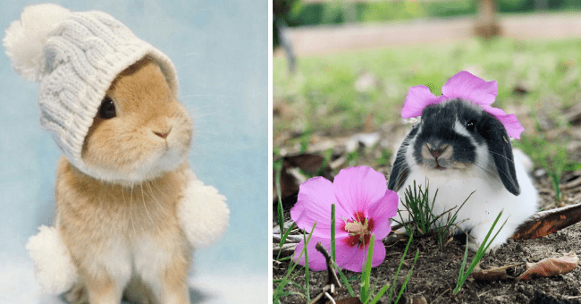 cute pictures of bunnies wearing tiny hats thumbnail includes two pictures including a bunny wearing a tiny knitted hat and another of a bunny with a flower on its head that looks like a hat