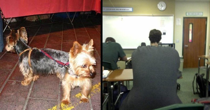 interesting and funny double take optical illusion images | two small dogs on leashes standing back to back looking like one dog with a head on each end | classroom small head on a big oversized body