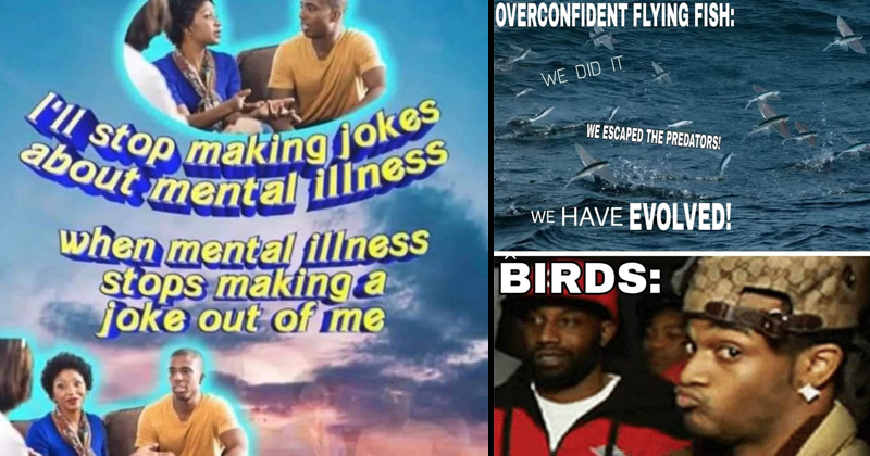 Funny random memes, weird memes, dark humor, funny tweets, strange memes, weird humor | stop making jokes about mental illness mental illness stops making a joke out me | OVERCONFIDENT FLYING FISH DID ESCAPED PREDATORS HAVE EVOLVED! BIRDS: conceited reaction