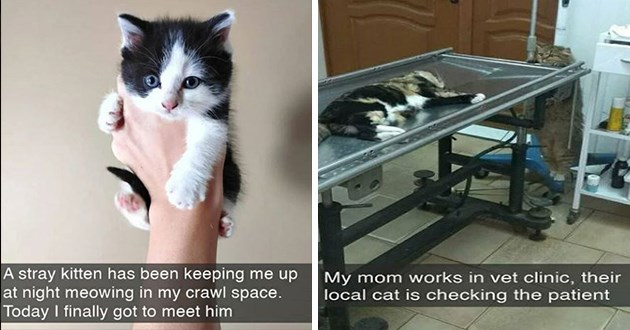 fresh cat snapchats - thumbnail includes two cat snaps one of someone capturing a kitten and one of a cat checking up on another cat at the vet | stray kitten has been keeping up at night meowing my crawl space. Today finally got meet him | My mom works vet clinic, their local cat is checking patient