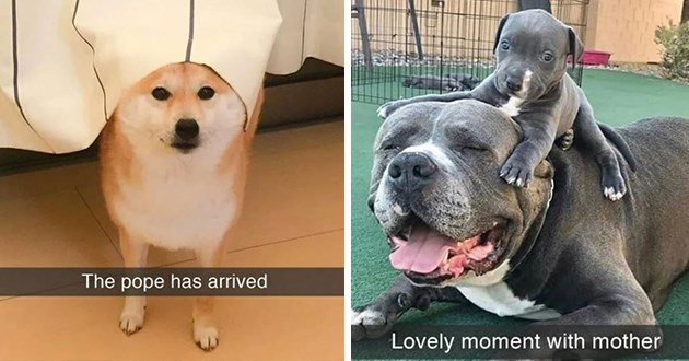"uplifting pure and wholesome dog snapchats - thumbnail includes two images a dog with tablecloth on head ""the pope has arrived"" and a dog with her puppy ""lovely moment with mother"""