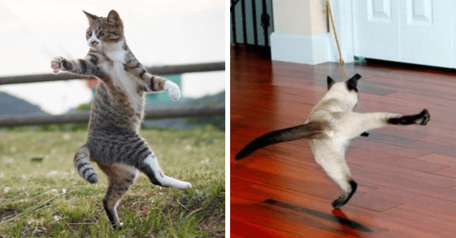 perfectly timed pictures of cats 'dancing' striking a pose thumbnail includes two pictures including a cat lifting its leg in a funny pose and another of a cat twisted around in a funny pose