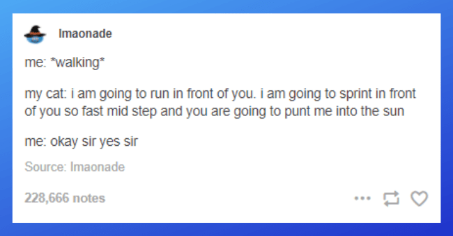 "collection of funny tumblr posts and threads about cats thumbnail includes one tumblr post 'Text - Imaonade me: ""walking* my cat: i am going to run in front of you. i am going to sprint in front of you so fast mid step and you are going to punt me into the sun me: okay sir yes sir Source: Imaonade 228,666 notes'"