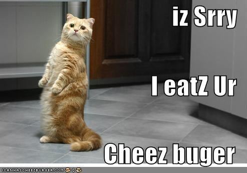 Cheezburger Image 1295254272