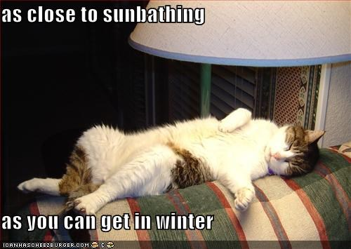 As Close To Sunbathing As You Can Get In Winter Cheezburger