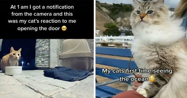 "most viral and adorable cat videos trending on instagram - thumbnail includes two images one of a lost cat ""at 1 am i got a notification from my camera and this was my cat's reaction to me opening the door"" and a cat by the beach ""my cats first time seeing the ocean"""
