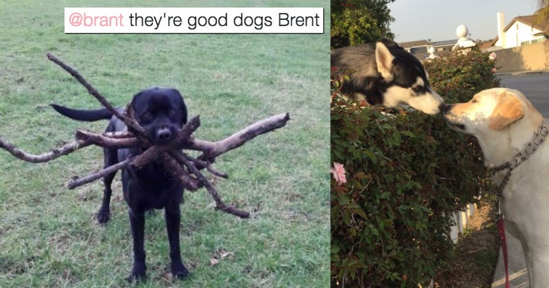 dogs twitter 2016 tweets funny - 1296645