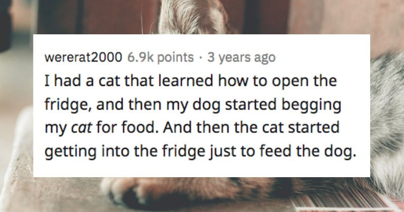 Various things that people's pets have done that were worryingly smart | wererat2000 had cat learned open fridge, and then my dog started begging my cat food. And then cat started getting into fridge just feed dog.