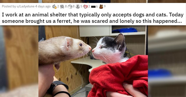 "pics and vids of the cutest animals of the week - thumbnail of cat and ferret ""I work at an animal shelter that typically only accepts dogs and cats. Today someone brought us a ferret, he was scared and lonely so this happened..."""