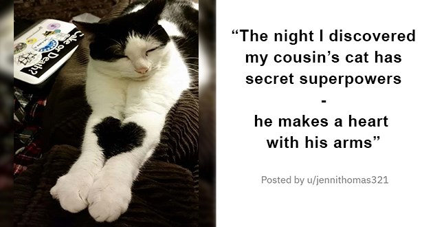 "cat medley filled with cuteness, laughs, mourning and loss, and wholesome cat pics - thumbnail of cat whose arms put together make a heart ""The night I discovered my Cousin cat has secret superpowers - he makes a heart with his arms"""