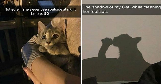 "fresh cat snapchats - thumbnail of two cat snap images one of a cat outside at night in someones arms ""not sure if she's ever been outside at night before"" and one of a shadow of cat licking it feet ""the shadow of my cat, while cleaning her feetsies"""