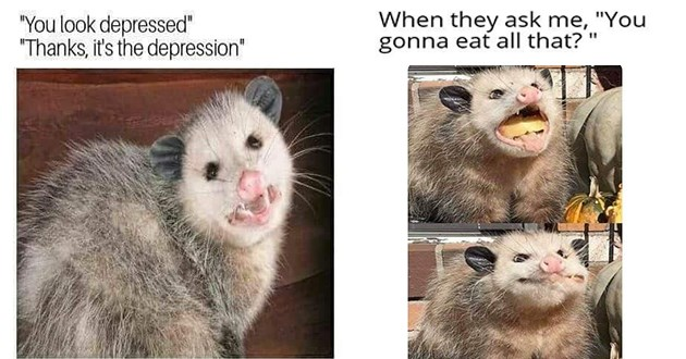 "funny and relatable memes featuring possums - thumbnail includes two memes one of smiling possum ""you look depressed"" ""thanks, it's the depression"" and one of a possum stuffing its face ""when they ask me, :you gonna eat all that?"""