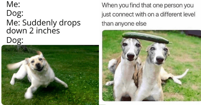 this week's collection of dog memes thumbnail includes two pictures including one of an excited dog 'Dog breed - Me: Dog: Me: Suddenly drops down 2 inches Dog:' and another of two identical dogs standing next to each other balancing a cucumber on their heads 'Dog - When you find that one person you just connect with on a different level than anyone else'