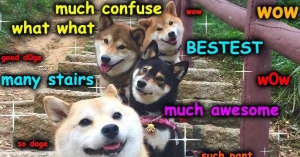 doge,photoshop battle,shiba inu