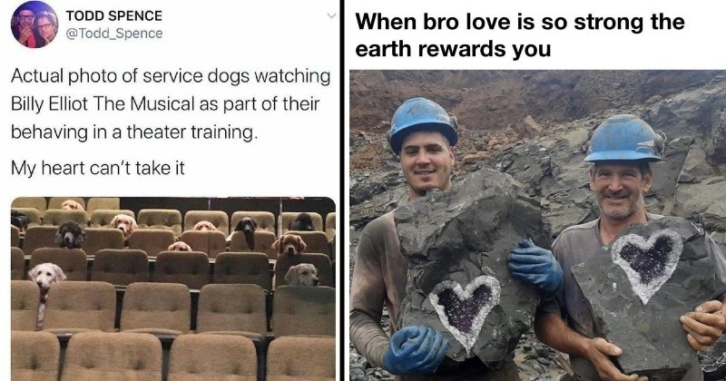 nice wholesome memes | TODD SPENCE @Todd Spence Actual photo service dogs watching Billy Elliot Musical as part their behaving theater training. My heart can't take | bro love is so strong earth rewards two men in hard hats holding heart shaped rocks