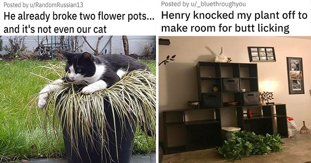 "cats vs plants - thumbnail of two images one of a cat laying down in a pot crushing the plant ""He already broke two flower pots... and it's not even our cat"" and one of a cat on top of a cabinet licking itself as a plant lays destroyed on the ground ""Henry knocked my plant off to make room for butt licking"""