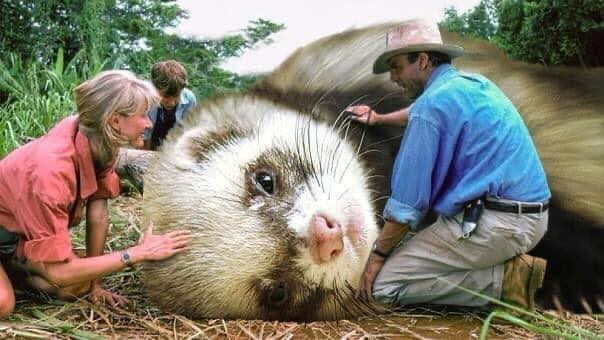 jurassic park still but instead of dinosaurs just giant ferrets - thumbnail of cute giant ferret laying down as sam neill and laura dern tend to it funny photoshopped images