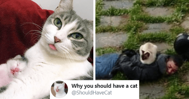 tweets from the 'why you should have a cat' account thumbnail includes two pictures including a cat sitting on an arrested suspect's back and another of a cat mom and cat baby with their tongues out 'Cat - Why you should have a cat @ShouldHaveCat'