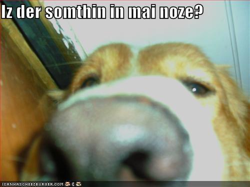 Cheezburger Image 1298931456