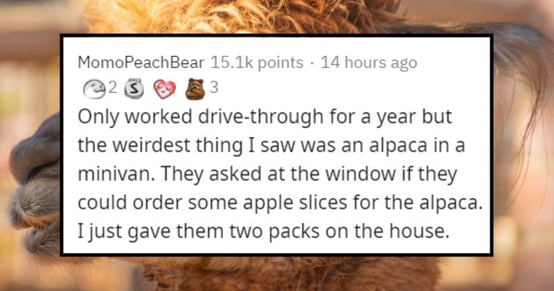 strange customers seen by drive-thru employees | MomoPeachBear 15.1k points 14 hours ago 3 Only worked drive-through year but weirdest thing saw an alpaca minivan. They asked at window if they could order some apple slices alpaca just gave them two packs on house.