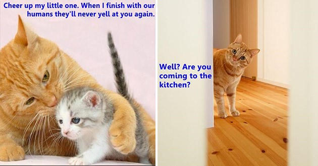 "original cat memes by i can has cheezburger users lolcats - thumbnail includes two cat memes, one of a cat telling a little kitten, ""cheer up my little one. When i finish with our humans they'll never yell at you again."" and one of a cat looking at the camera, ""Well? Are you coming to the kitchen?"""