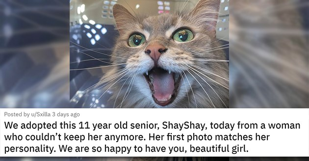 "all the newly adopted rescue animals of the week - thumbnail of happy senior cat ""We adopted this 11 year old senior, ShayShay, today from a woman who couldn't keep her anymore. Her first photo matches her personality. We are so happy to have you, beautiful girl."""