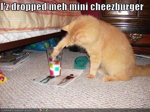 Cheezburger Image 1300210944