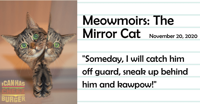 "the seventh entry of meowmoirs diary of a cat all about the cat meeting the cat in the mirror thumbnail includes a picture of a cat and the cat's reflection the name of the entry and a quote from it 'Cat - Meowmoirs: The Mirror Cat November 20, 2020 ""Someday, I will catch him off guard, sneak up behind him and kawpow!"" ICAN HAS BURGER.'"