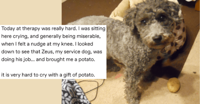 wholesome and cute tumblr posts and threads about dogs thumbnail includes a picture of a dog and a potato with the caption 'Today at therapy was really hard. I was sitting here crying, and generally being miserable, when I felt a nudge at my knee. I looked down to see that Zeus, my service dog, was doing his job... and brought me a potato. it is very hard to cry with a gift of potato'