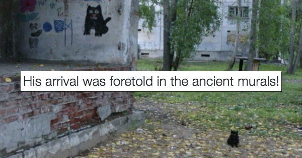 twitter,tweet,Cats,funny