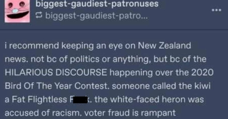 Funny New Zealand bird election drama | biggest-gaudiest-patronuses S biggest-gaudiest-patro recommend keeping an eye on New Zealand news. not bc politics or anything, but bc HILARIOUS DISCOURSE happening over 2020 Bird Year Contest. someone called kiwi Fat Flightless Fuck white-faced heron accused racism, voter fraud is rampant