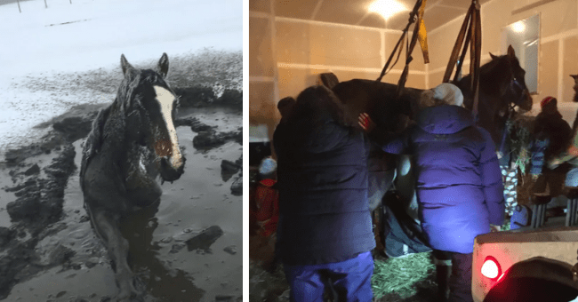 story about a horse who got stuck up to its neck in frozen mud and was rescued and is expected to recover thumbnail includes two pictures including a horse stuck in frozen muddy water and another of a horse lifted up using straps around its bpdy