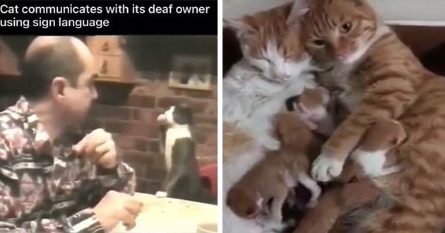 gallery of adorable and funny cat gifs - thumbnail includes two images of of a cat communicating with its deaf owner using sign language and one of a cute cat family