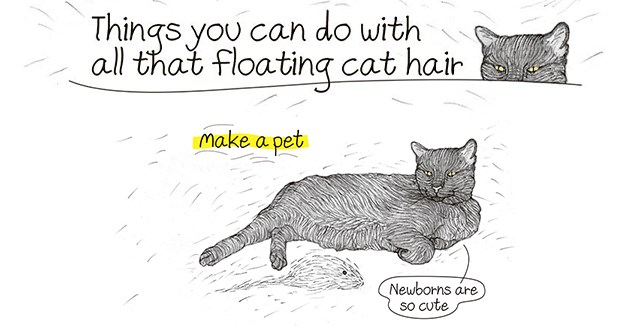 "things to do with all the floating cat hair in the air - thumbnail includes title ""things you can do with all the floating cat hair"" and one of the ideas, making another pet out of cat hair"