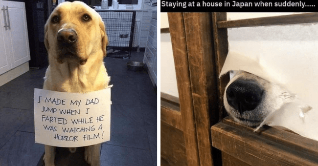 memes tweets and pictures of funny dogs who are also good dogs thumbnail includes two pictures including a dog sticking its nose through a Japanese door 'Nose - Staying at a house in Japan when suddenly' and another of a dog with a shaming sign on it 'Dog - I MADE MY DAD JUMP WHEN 1 FARTED WHILE HE WAS WATCHING A HORROR FILM!'