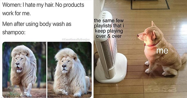 "list of funny and fresh animal memes - thumbnail includes two memes one of a lion with a gorgeous mane ""women: i hate my hair. no products work for me. Men after using body wash as shampoo:"" and of a shiba inu sitting by a heater ""the same few playlists that i keep playing over and over me"""