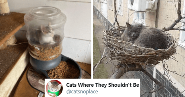 tweets from the twitter user Cats Where They Shouldn't Be @catsnoplace of cats being in places that they shouldn't be thumbnail includes two pictures including a cat inside of a food dispenser and another of a cat sitting in a bird's nest as well as a screenshot of the name of the twitter user