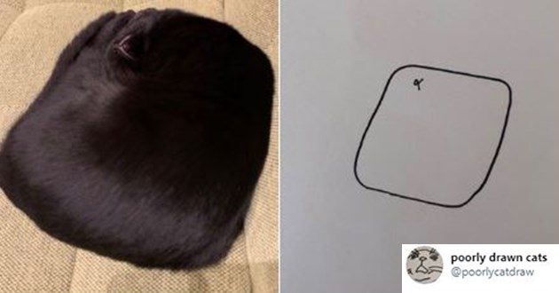 funny and cute poorly drawn cat drawings - thumbnail of cat shaped like a square and a drawing of a square with a mouth