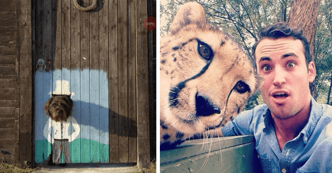 this week's collection of pictures worth more than 1000 words thumbnail includes two pictures including a man taking a selfie with a cheetah and a dog sticking its head through a door with a painting on it making the dog look like a gentleman with a hat