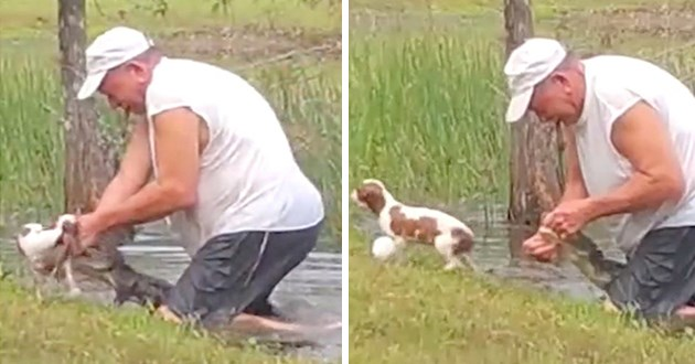 heroic man jumps into pond after alligator that grabbed his puppy, he wrestles with the alligator's jaws and frees his dog - thumbnail includes two images one of the man working to open the alligator's jaw to free his dog and one where the dog escapes the alligator's jaws