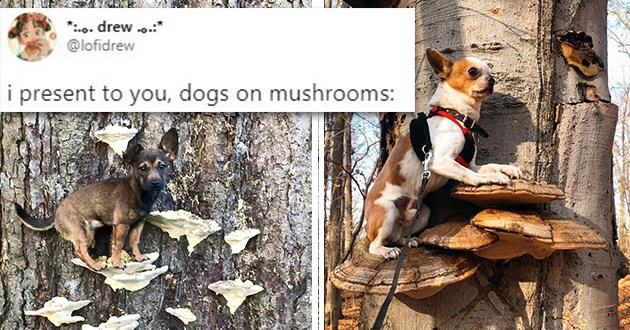 "adorable dogs standing on mushrooms - thumbnail of dogs standing on mushrooms ""i present to you, dogs on mushrooms:"""