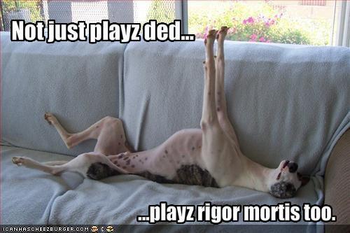 couch greyhound play dead stiff upside down - 1302949120