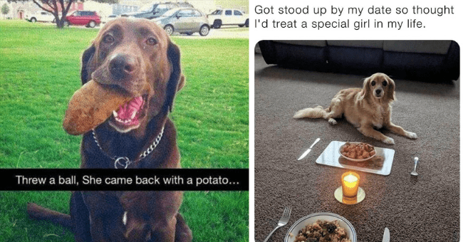 this week's collection of dog memes thumbnail includes two pictures including a dog with a potato in its mouth 'Dog - Threw a ball, She came back with a potato... O Jam Press' and a dog having a romantic candle-lit dinner with its owner 'Dog - Got stood up by my date so thought l'd treat a special girl in my life'