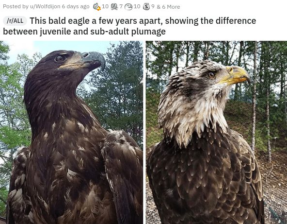 interesting intriguing and curious videos photos pics and pictures awesome wow today i learned art graffiti history | Posted by u/Wolfdijon 6 days ago 10 2710 39 6 More Ir/ALL This bald eagle few years apart, showing difference between juvenile and sub-adult plumage