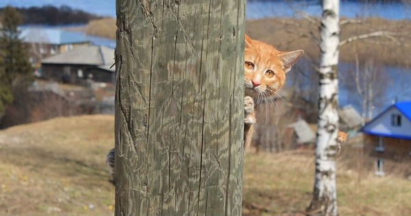 peeking photoshop battle Cats hiding - 1303301