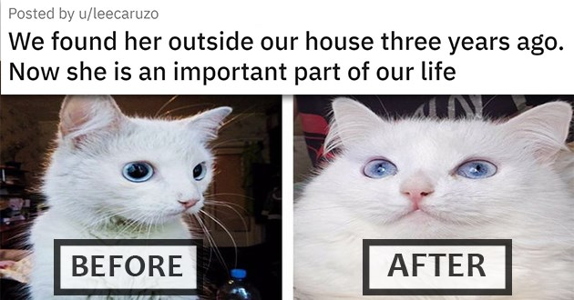 """at medley filled with cuteness, laughs, rescues, glow ups, and wholesome cat pics - Thumbnail of a before and after rescue of a cat """"We found her outside our house three years ago. Now she is an important part of our life"""""""