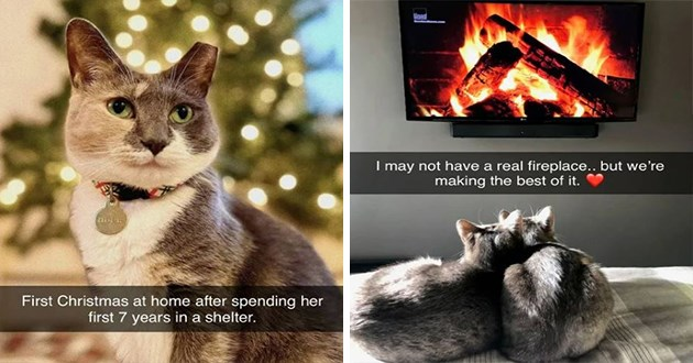 fresh cat snapchats - thumbnail of two cat snap images one of a cute spotted cat First Christmas at home after spending her first 7 years shelter. | may not have real fireplace but making best two cats snuggling in front of a screen showing logs burning